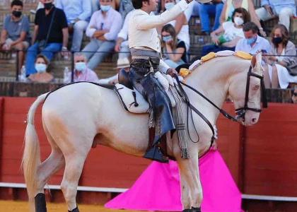 Muere el caballo Máximo tras sufrir una grave cornada en Sevilla